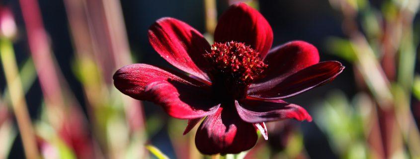 Natur, Blüten, Herbst